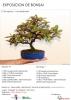 Cartel Exposicion de Bonsai Puçol