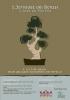 Cartel I Jornades del Bonsai - Ciutat de Morella