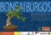 Cartel 24ª Exposicion y 21º Concurso de Bonsai - Bonsai Burgos 2010