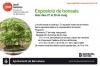 Cartel Exposició de bonsais - Jardí botànic Barcelona