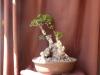 evolucion y trabajo en madera de acebuche